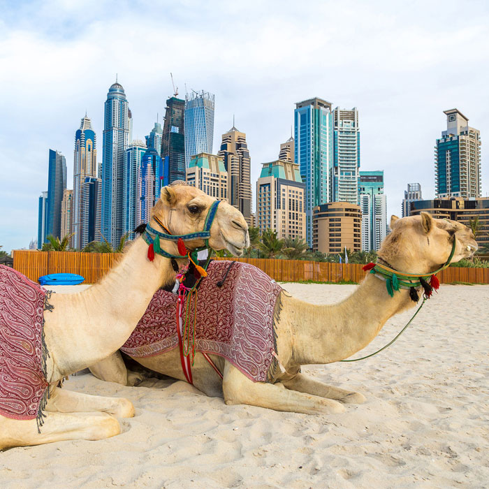 Dubai con 5 Excursiones